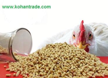 انواع دان آماده مرغ تخمگذار